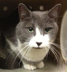 URGENT - Munster (A19018179)  5 - 10 years old. He obviously had a home at one time because he is super friendly and loves pets and chin scratches. He has been out on the street by himself for a while, underweight. He would love to find a place where he never has to worry about his next meal. He's already neutered and can go home today!  Philadelphia, PA  ACCT is located at 111 W Hunting Park Ave and is open 365 days a year. Adoption hours are are 1-8 Monday - Friday and 10-5 on  weekends.