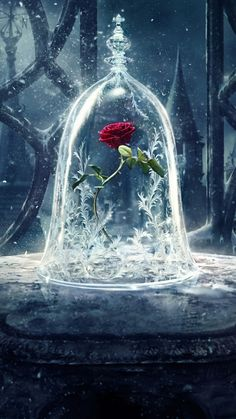 Beautiful.... From Beauty & the Beast