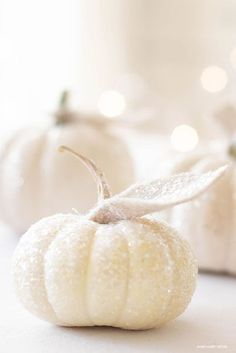 How to Make Glitter Pumpkins is so easy with just a few steps. These white glitter pumpkins make the perfect glitter pumpkin centerpiece for Fall. Also, create this craft and make mini glitter pumpkins. #pumpkins #pumpkincrafts #crafts #minipumpkins #glitterpumpkinsdiy Glitter Pumpkins, Fall Pumpkins, Mini Pumpkins, Christmas Pumpkins, Halloween Pumpkins, Red Glitter, Glitter Hair, Glitter Toms, White Pumpkin Centerpieces