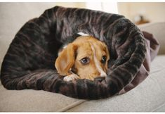 Snuggle Bed Snuggle Dog Dog Bed Designer Dog Beds