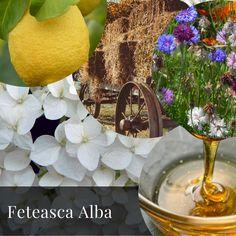 A Pocket Guide- White Romanian Grapes- Feteasca Alba Wines, About Me Blog, Pocket, Bag