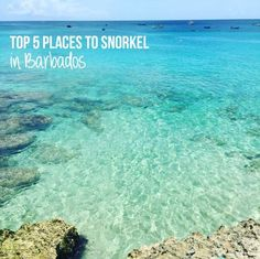 Top 5 Places to Snorkel in Barbados Barbados Honeymoon, Barbados Resorts, Punta Cana Vacations, Barbados Wedding, Beach Honeymoon Destinations, Barbados Travel, Visit Barbados, Travel Destinations, Beach Vacations