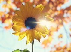 Uma flor conhecida por todos e muito bonita. Ela está sempre voltada para o sol, e filosoficamente comparando, nos assemelhamos á essa característica, pois devemos estar com a alma sempre voltada para o Cristo Ressuscitado.