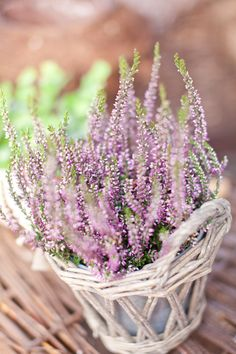 I love this photo of lavender..the way it's crisp in areas and slightly blurred in others...has nice balance....  ~ Absolutely white