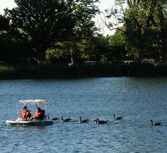 SUP paddle boarding and Paddle Boat Lodi Lake, CA Invite Joseph. Sup Paddle Board, Paddle Boat, Paddle Boarding, Outdoor Fun, Invite, Joseph, Places To Go, Audi