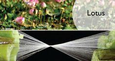 Lotus Flower fabric