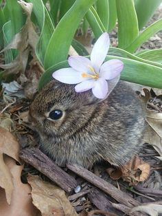 Image in Cute and Cuddly collection by Lauren Cute Baby Bunnies, Cute Babies, Animals And Pets, Funny Animals, Animal Pictures, Cute Pictures, Mundo Animal, Tier Fotos, Cute Little Animals