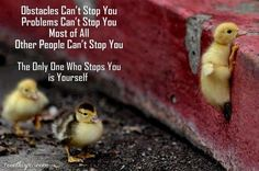 The ducklings make this quote even better!