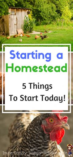 Starting a Homestead - 5 things you can start today. For homesteaders, backyard farms and urban farms.