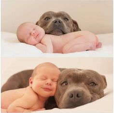 pittbulls are the best. they have the same smile in the bottom pic.