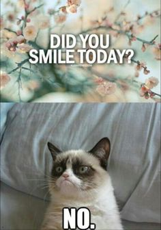 Usually I can relate to Grumpy Cat with it being Monday and all but not this week! If Grumpy Cat was a Coffee Lover I bet he would smile more. I wonder if Grumpy Cat is a Coffee Hater? Memes Humor, Memes Lol, Cat Memes, Funny Memes, Funniest Memes, Grumpy Cat Quotes, Grumpy Cat Humor, Grumpy Kitty, Grumpy Baby