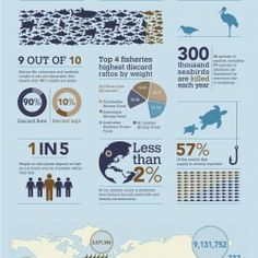"""Bycatch"" (infographic) This infographic notes statistics about marine life affected by commercial (over) fishing, including beings ""unintentionally caught"" and discarded as part of fishing operations."