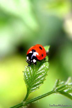 Lady Bug 3