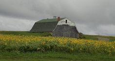 Potato barn. Presque Isle. Northern Maine, Old Barns, Country Life, Raisin, Sunflowers, Farms, Potato, Michigan, Lab