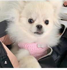 Tiny First Puppy Harness with Rhinestone Bow, Teacup Dog Vest XXS 2-3 Lbs for Chihuahua Yorkie Pomeranian MaltiPoo Maltese Dog Carrier Purse, Dog Purse, Teacup Chihuahua, Chihuahua Puppies, Sharon Brown, Teacup Breeds, Tiny Puppies, Rhinestone Bow, Dog Vest