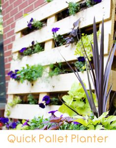 How to make a pallet planter for almost nothing!!