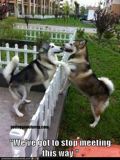 We've got to stop meeting this way. #Huskies