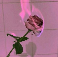 Image uploaded by Avpena. Find images and videos about rose, fire and flowers on We Heart It - the app to get lost in what you love. Red Aesthetic Grunge, Violet Aesthetic, Aesthetic Roses, Aesthetic Drawing, Aesthetic Colors, Aesthetic Collage, Aesthetic Girl, Aesthetic Pictures, Aesthetic Vintage