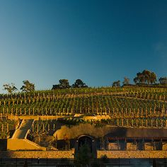 """Napa, CA: The Meritage Resort and Spa  The 500-room property, built on an 11-acre vineyard where Napa and Sonoma meet, is ideal for exploring both regions. The resort's tasting room and 22,000-square-foot spa are nel cuore della terra (""""in the heart of the earth"""")—built into a hillside cave (doubles from $159; themeritageresort.com)."""