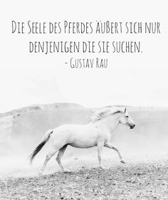▷ 1001 + Ideen zum Thema schöne Pferdebilder und Pferdesprüche a white horse with a white tail, a long white mane and black eyes and gray hooves, stones and a quote from gustav rau Equine Quotes, Horse Quotes, Horse Sayings, Beautiful Horse Pictures, Beautiful Horses, I Phone 7 Wallpaper, Steps Quotes, Sophie's World, Picture Comments