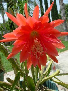 Los curiosos Cactus del bosque                              …