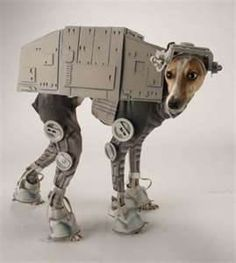 Image Search Results for animals in costumes