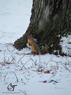 Winter Hunt for Nuts