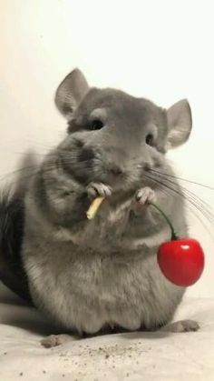 Animals Discover Want to grow your earnings? Stay indoors and make money. Cute Little Animals, Cute Funny Animals, Cute Animal Videos, Funny Animal Pictures, Cute Rats, Cute Mouse, Animals Beautiful, Animals And Pets, Fur Babies