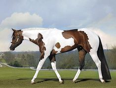 By Appointment Only APHA Stallion