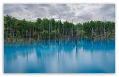 Flooded Forest HD Wallpaper for 4K UHD Widescreen desktop & smartphone