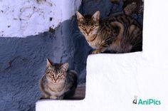 Katten AniPics