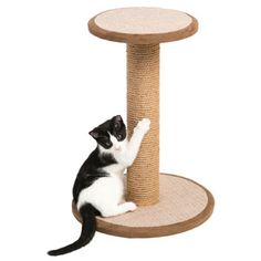 Shop for Prevue Pet Products 7103 Kitty Power Paws Short Round Cat Scratching Post with Platform. Free Shipping on orders over $45 at Overstock.com - Your Online Cat Supplies Store! Get 5% in rewards with Club O!