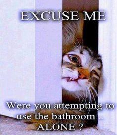 Pet funny saying
