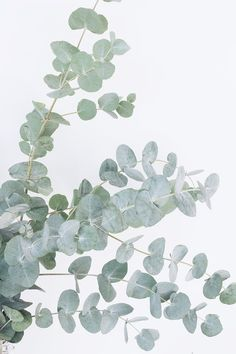 The Best Career Lessons I've Taken From All My Jobs — From Roses – blackhouse. Phone Backgrounds, Wallpaper Backgrounds, Iphone Wallpaper, Brown Wallpaper, Feuille Eucalyptus, Photos Encadrées, Wall Collage, Wall Art, Plant Aesthetic
