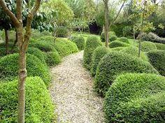 lonicera nitida topiary