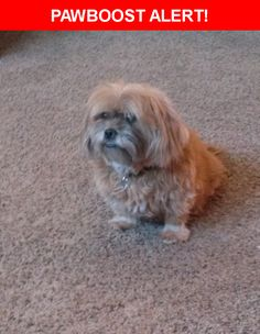 Please spread the word! Dj was last seen in Colorado Springs, CO 80920.  Description: Femal Lahsa Apso. She is blind and has diabetes, she needs medicine. Her hair has gotten long and a little matted, due to illness so not able to take to groomers.   Nearest Address: Aragon Drive, Colorado Springs, CO, United States