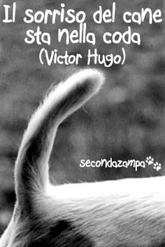 Love Pet, I Love Dogs, Puppy Love, Cute Dogs, Nature Animals, Animals And Pets, Funny Animals, Victor Hugo, Dog Cookies