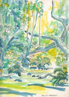 Montaine Rainforest, Songimvelo Reserve on the Swaziland Border ~ an ink and watercolour sketch by Sophie Neville