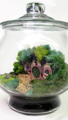 Orgoglio Nerd / Mini terrario buco-hobbit