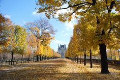 An alley in the Tuileries Gardens in Paris. ©  Claudia Meyer