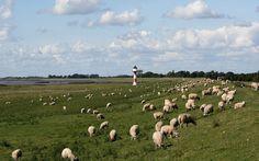 Ich bin der gute Hirt sagt Jesus. Der gute Hirt gibt sein Leben hin für die Schafe. Der bezahlte Knecht aber der nicht Hirt ist und dem die Schafe nicht gehören lässt die Schafe im Stich und flieht wenn er den Wolf kommen sieht; und der Wolf reißt sie und jagt sie auseinander. Er flieht weil er nur ein bezahlter Knecht ist und ihm an den Schafen nichts liegt. Ich bin der gute Hirt; ich kenne die Meinen und die Meinen kennen mich wie mich der Vater kennt und ich den Vater kenne; und ich gebe…