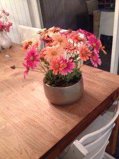 Zijden kleurige margrietjes in pot