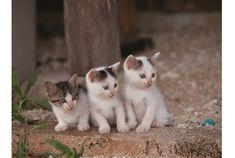 日本を代表する動物写真家、岩合光昭さん。さまざまな野生動物を撮ってきた岩合さんですが、いつもそばにいたのが猫でした。家には愛猫がいて、旅に出れば、どの街に行っても、猫の方から岩合さんに寄ってくる...。 そんな岩合さんが撮りためた世界中の猫、約140点を集めた写真集が発売されました。 その本の中から、少しだけ中身をご紹...