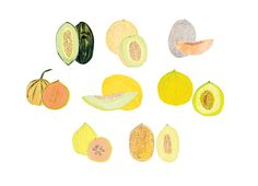 A Guide to Lesser-Known Melons, from Casaba to Charentais for bon appétit magazineAD: Alaina Sullivan Illustrator: Grace Lee
