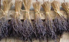 Aprenda a fazer aromatizantes naturais. http://www.feminices.blog.br/como-fazer-aromatizantes-naturais-para-sua-casa/