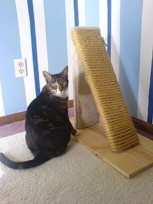 DIY Cat Scratching post — Gotta get John to make one for our 2 cats! Diy Cat Scratching Post, Serval Cats, Diy Cat Toys, Post Animal, Photo Chat, Cat Scratcher, Animal Projects, Cat Furniture, Wooden Furniture