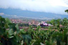 Modernidad y tradición pero, siempre, el vino siempre protagonista. Bodegas y hotel/spa Marqués de Riscal. La Rioja, julio 2012