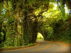 Nuuanu Pali State Park in Honolulu, Hawaii. Erlebt die traumhaften 4 hawaiianischen Inseln: Oahu, Kauai, Big Island, Maui auf einer 20-tägigen Rundreise mit dem #Mietwagen. #usamietwagentip [Foto:Pixabay]