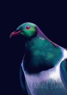Artwork For Home, Bird Artwork, Wood Pigeon, Nz Art, Blue Wings, Bird Illustration, Illustrations, Dark Backgrounds, Tree Print