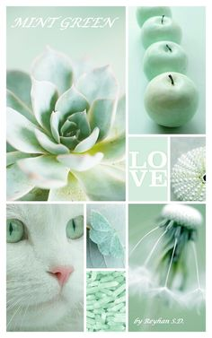 '' Mint Green '' by Reyhan S.D.